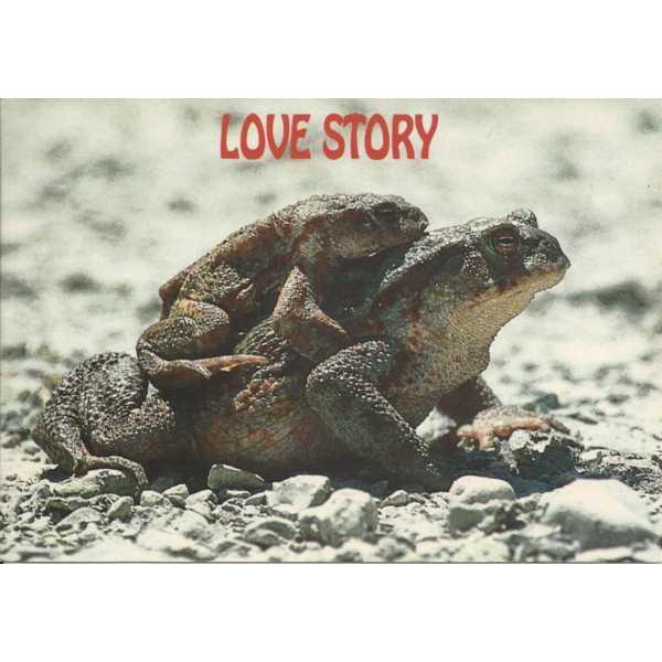 LOVE STORY ŻABA POCZTÓWKA WR293