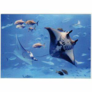 MANTA OCEAN POCZTÓWKA 3D TRÓJWYMIAROWA 3D322
