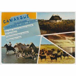 FRANCJA CAMARGUE KONIE POCZTÓWKA A52167
