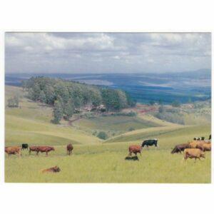 GREYTOWN NATAL SOUTH AFRICA WIDOKÓWKA A53504