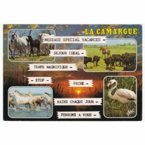 FRANCJA CAMARGUE KONIE POCZTÓWKA A56022