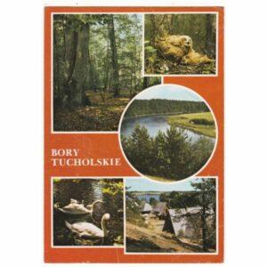 BORY TUCHOLSKIE REZERWAT CISY STAROPOLSKIE WIDOKÓWKA A58785