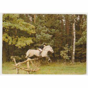 OPOLE BIERKOWICE LUDOWY KLUB JEŹDZIECKI OSTROGA KOŃ WIDOKÓWKA A59075