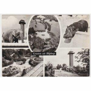 HOLANDIA ROTTERDAM SŁOŃ HIPOPOTAM WIDOKÓWKA A60839