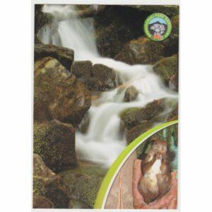 BABIOGÓRSKI PARK NARODOWY WIDOKÓWKA A65570
