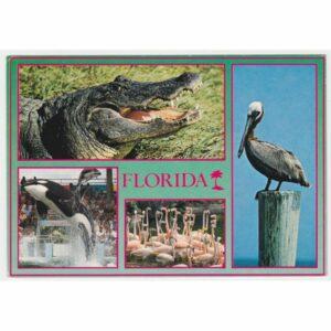 FLORYDA ZWIERZĘTA WIDOKÓWKA A66082