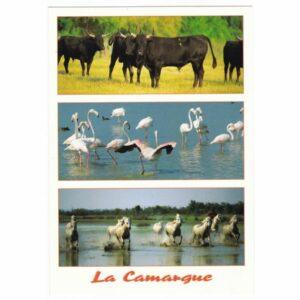 CAMARGUE ZWIERZĘTA WIDOKÓWKA A26130