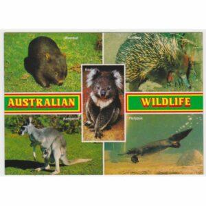 AUSTRALIA ZWIERZĘTA POCZTÓWKA A66602