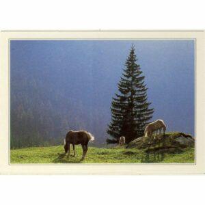 AUSTRIA TYROL KONIE WIDOKÓWKA A66682