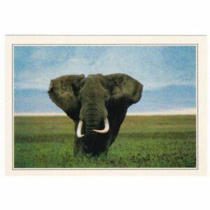 KENIA SŁOŃ WIDOKÓWKA A66820