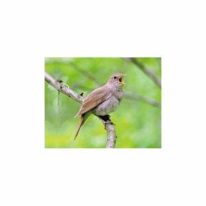 MAGNES MAGNETKA SŁOWIK ptak 3D trójwymiarowy 2981