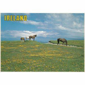 IRLANDIA KONIE POCZTÓWKA A75525