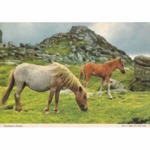 IRLANDIA DARTMOOR KOŃ POCZTÓWKA A75535