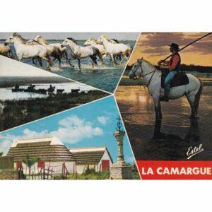 FRANCJA CAMARUGE KOŃ POCZTÓWKA A75536